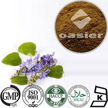 Herbal Extract/Coleus Forskohlii Extract Powder/10%~20%Forskolin