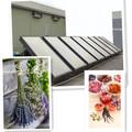 haricots verts de séchage séchage de fruits et légumes de lavande lavande sèche machines solaire système solaire