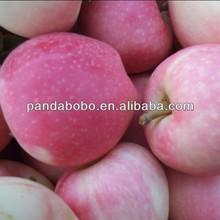 apples fresh gala apple/fuji apple for india /bangladesh