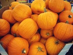 00971561840750,,,Fresh Pumpkins