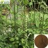 100% nature black cohosh root powder