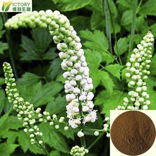 100% nature black cohosh extract 2.5%/black cohosh p e