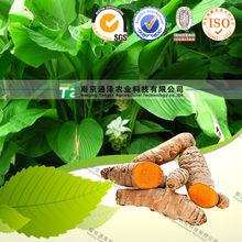 PURE natural herbal medicine Curcuma longa L. from GMP manufacturer