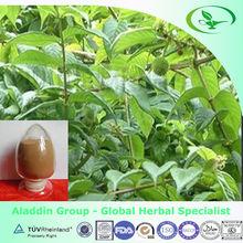 High quality Uncaria rhynchophylla P.E/RamulusUncariaecumUncis extract with alkaloid