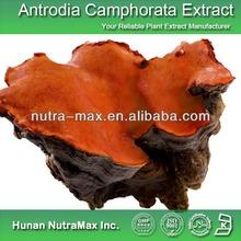 Triterpenoid Antrodia Camphorata Extract Triterpene