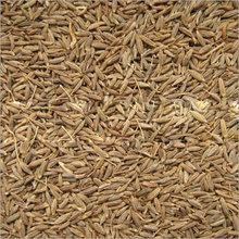 gujarat origin Cumin Seed