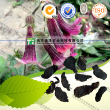 High quality herbal medicine Rehmannia glutinosa Libosch from GMP manufacturer
