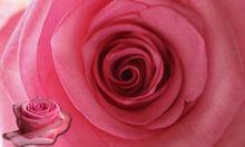 Fresh Cut Flowers Pink