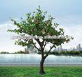 Yapay elma ağacı, guangzhou Shengjie yapay ağaç
