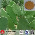 100% природных экстракт кактуса hoodia порошок