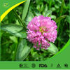 Manufactor offer high purity natural red clover extract for antibiotic
