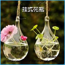 Tipos de plantas ornamentales, Plantas ornamentales nombres, Cristal del ornamento