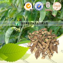 NATURAL herb medicine dispel rheumatism Sinomenium acutum Rehd.et. Wils