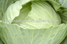 professional exporter of Fresh cabbage