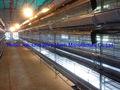 Automatico pollame feed attrezzature& voliera di pollo