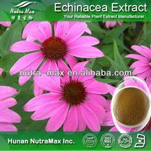 High Quality 2%~4% Cichoric Acid ,Cichoric Acid Extract,Cichoric Acid Echinacea Purpurea Extract (CAS NO.:70831-56-0)