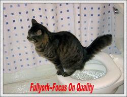 Litter Kwitter Cat Toilet Training Kit As Seen On TV Cat Toilet Seat