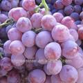 Típico dulce árbol de uva de proveedor original