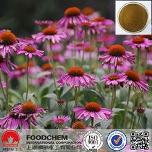 Natural Powdered Echinacea Purpurea Extract