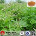 a base de hierbas de la medicina de raíz de valeriana extracto