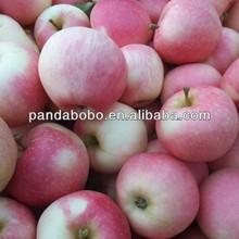 fresh apple chinese apple fruit gala apple on sale for Bangladesh/India/ SriLanca
