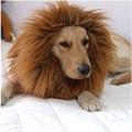 كبير الشعر بدة الأسد الكلب حيوان أليف الباروكات مهرجان الطرف هالوين ازياء ملابس تنكرية