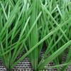 indoor football artificial grass from Zhejiang
