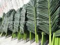 atacado artificial decoração fake folhas de coqueiro folhas made in china