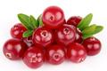 natural extrato de cranberry suco de amora cranberries congeladas orgânico cranberry suco concentrado