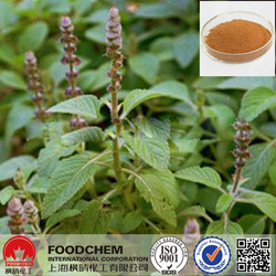 Raw Material Coleus Forskohlii Root Extract