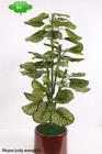 2014 Wholesale Artificial green apple/artificial plant/Artificial bonsai for decoration indoor