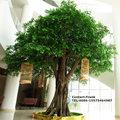 Interior& exterior de fibra de vidro do tronco e pe toque real folhas de banyan artificial ficus árvore para decoração