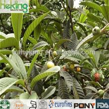 100% natural Loquat Leaf Extract