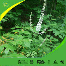 Factory supply 100% Pure black cohosh plants extract (no addition)