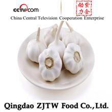 Big Size Tasty Elephant Garlic