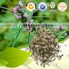Cure dysmenorrhea herbal medicine Leonurus heterophyllus Sweet