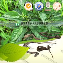 de alta calidad a base de hierbas de la medicina dyer del pastel de la hoja