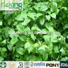 Manufacture Natural Tripterygium wilfordii Hook