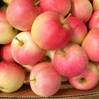 2014 Fresh Gala apple
