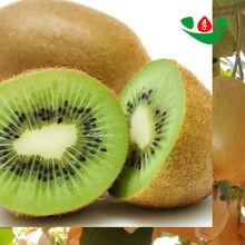 new crop high quality a kiwi fruit in bulk