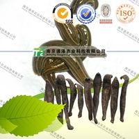 Organic crude medicine Ma Huang