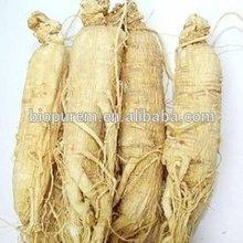 Ginseng Extract Powder Total Saponins 80%