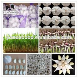 wholesale garlic price export to dubai