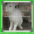 tavşan satılık çiftlik