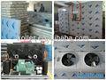 congelados de alta calidad cámaras frigoríficas para el almacenamiento de hielo y de alimentos