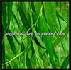 Natural 15%-98% salicin white willow extract powder/Salix Alba L.