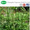 Pure 5%Triterpene glycosides black cohosh powder extract/Cimicifuga foetida L