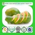 Natural papaína en polvo 5:1 10:1 amoniocas: seco 9001-73-4 extracto de papaya