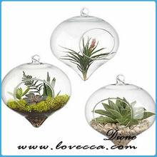 newly developped glass bowl terrarium