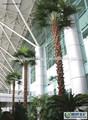 As árvores artificiais/jardim artificial folhas/plam artificial de árvores decorativas em aeroporto